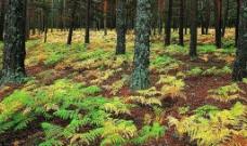 森林 树叶图片