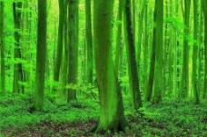 森林 雨林图片