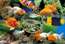 漂亮的鱼类图片