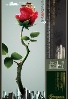 玫瑰园图片
