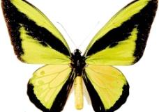 蝴蝶4图片