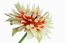 高清花朵图片
