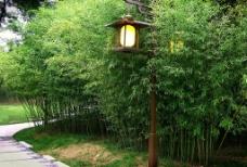 翠竹中灯盏图片