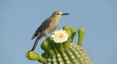 鸟与仙人掌图片