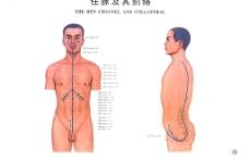 中医经络图(全套)-任脉图片