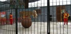 瓦岗寨之动物表演图片