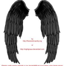 黑翅膀图片