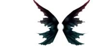 经典翅膀图片