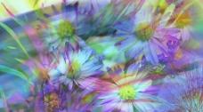 电脑制作抽象花卉图片