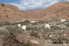 新疆托木尔峰国家级自然保护区风景图片
