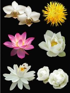 分层花朵图片