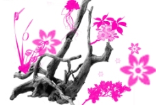 真实的植物及花朵笔画