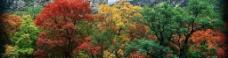 山 树图片