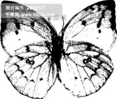 全球首席大百科 水墨 黑白 笔刷 昆虫 蝴蝶 虫子 拓印