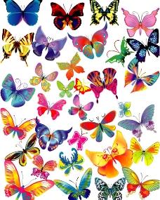多款漂亮蝴蝶图片
