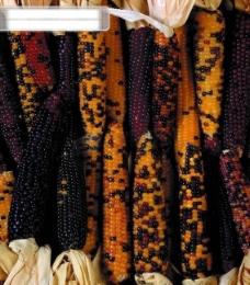 食品 背景 材质 肌理 纹理 质感 视觉 种子 果实 叠加 积累 重叠 密密麻麻 繁多 广告素材大辞典