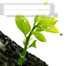 树叶 草地 蜗牛 蝴蝶 夹子 风景 相片 雨滴 水珠 向日葵 昆虫 PSD分层素材源文件 韩国花纹图库