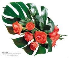 玫瑰0019