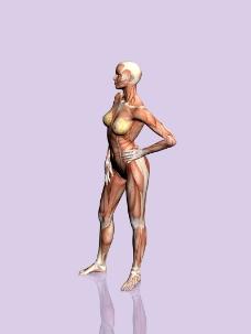 肌肉人体模型0034