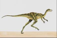 恐龙插画0040