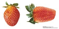 水果0049