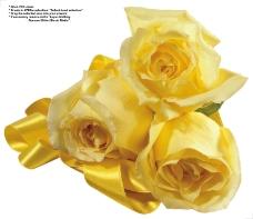 玫瑰0065