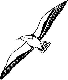 鸟类动物1032