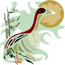 鳥類動物0646