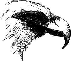 鸟类动物1330
