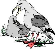 鸟类动物0332