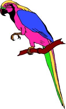 鸟类动物0245