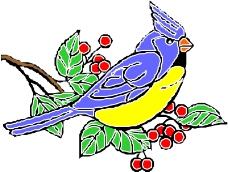 鸟类动物1186