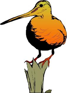鸟类动物0301