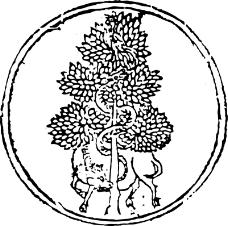 清代1255