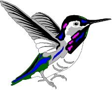 鸟类动物0939