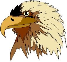 鸟类动物1101
