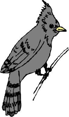 鸟类动物0813