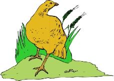 鸟类动物0318