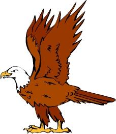 鸟类动物0739