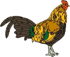 鸟类动物1322