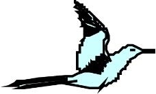 鸟类动物0909