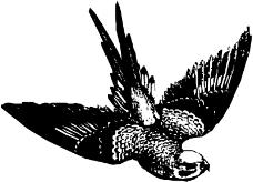 鸟类动物1197