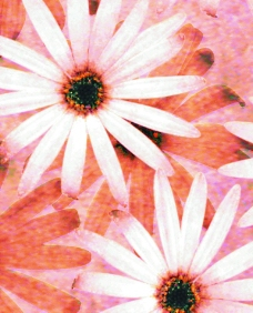 层叠花朵图片