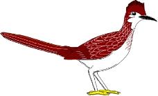 鸟类动物1052