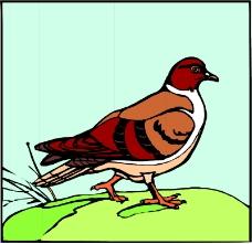 鸟类动物0369
