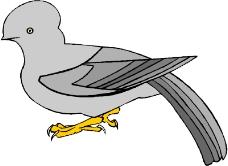 鸟类动物0392